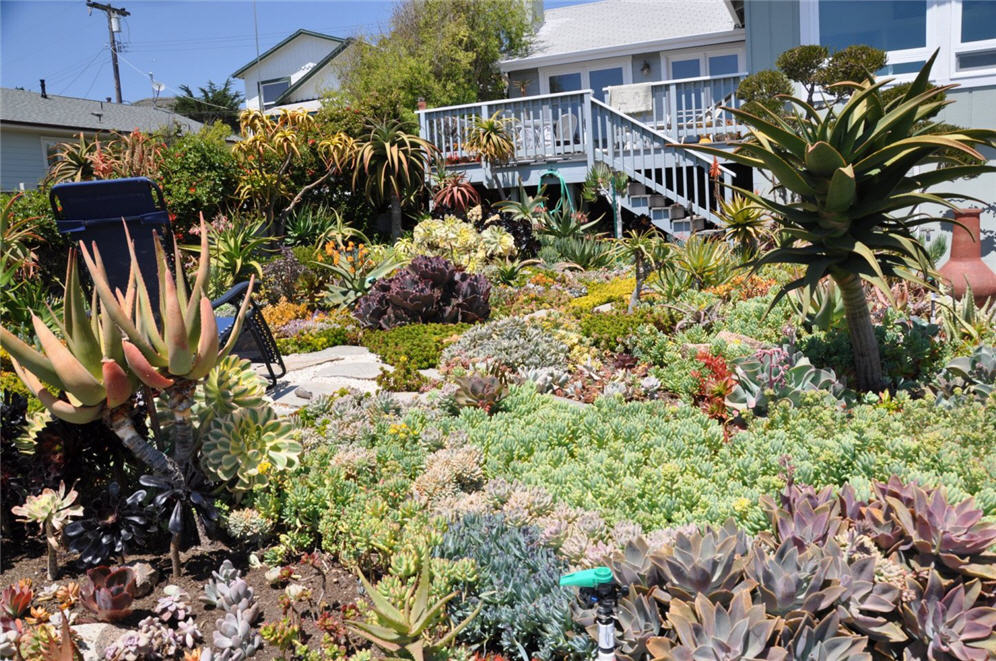 Packed Succulent Garden