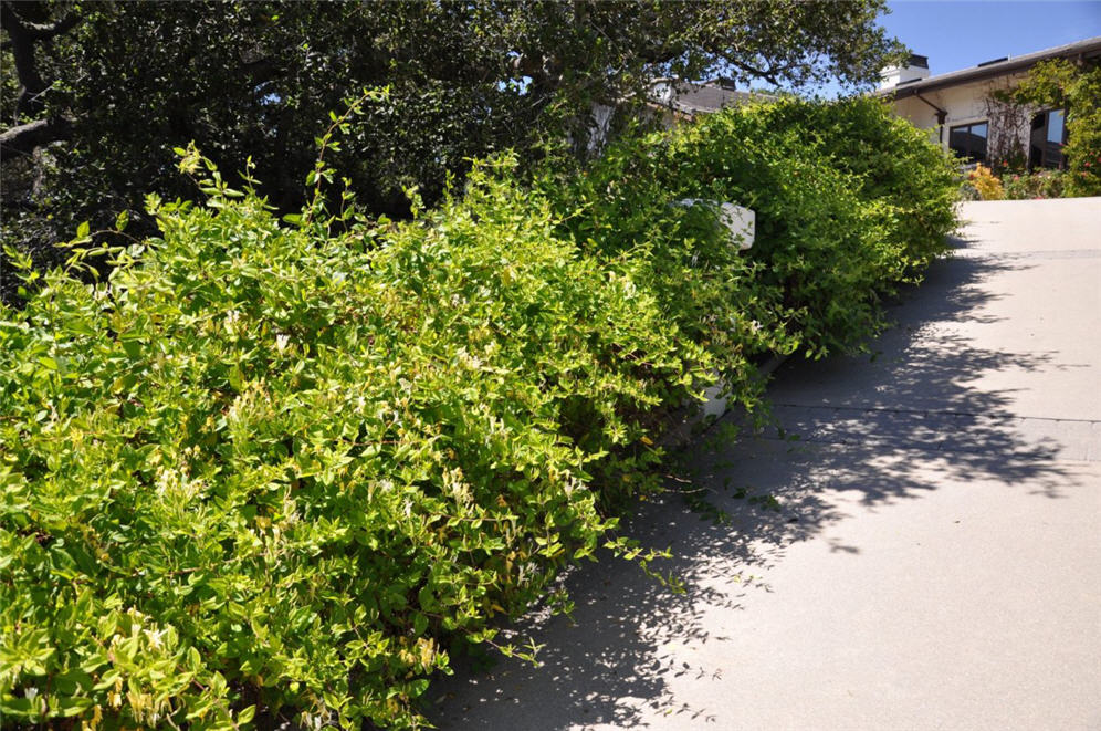 Packed Shrubs Along Driveway