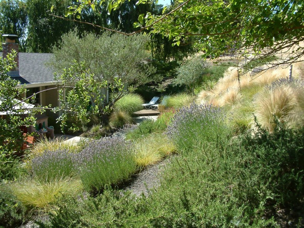 Peaceful hillside for Designing with grasses