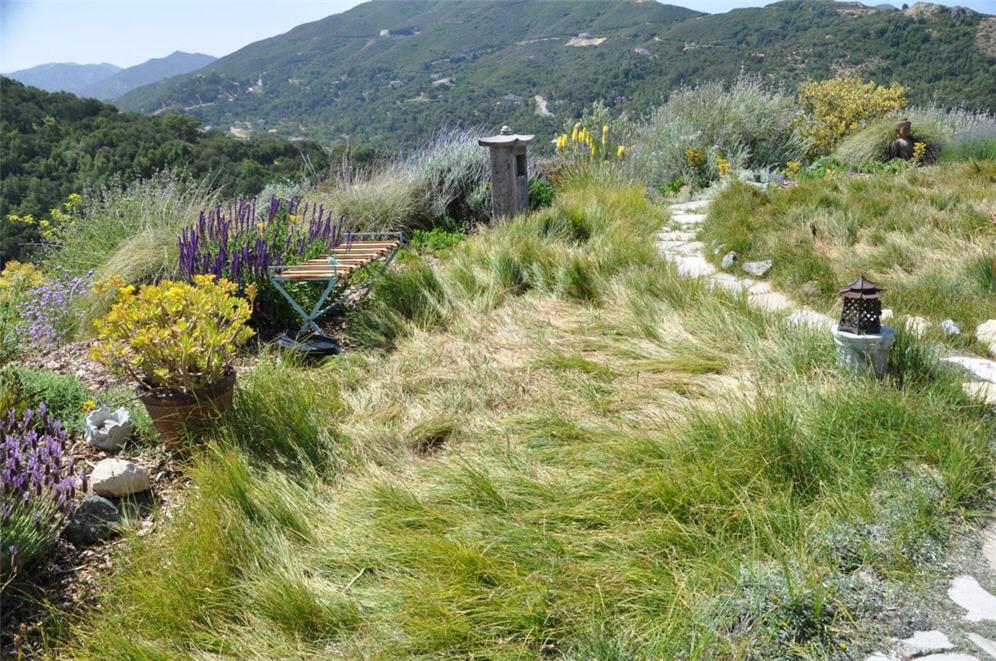 Ornamental grass garden workwithnaturefo