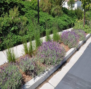 Parking Strips